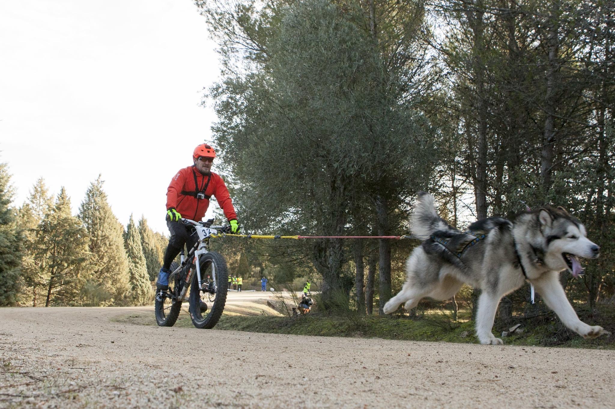 Foto: Emilio Cuenca. Javier Busón con su Malamute participando en una prueba de Sprint